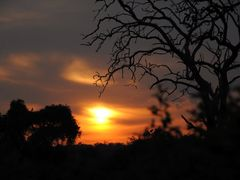 Dry tree in the sunrise - Chobe NP - Botswana by <b>diego_cue</b> ( a Panoramio image )