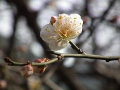The spring is at near your nose by <b>peacemaker453354 (No Views)</b> ( a Panoramio image )