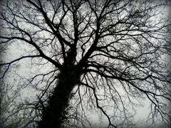 Rajsko drvo by <b>® Eagle S ©</b> ( a Panoramio image )