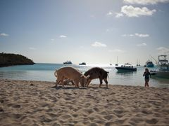 Swimming Pigs of Big Majors Spot by <b>IslandDreamin</b> ( a Panoramio image )