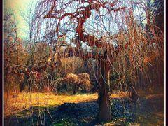 Черница  by <b>mfilev</b> ( a Panoramio image )