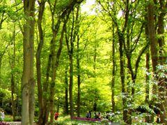 The greener side of Keukenhof by <b>francinelb3</b> ( a Panoramio image )
