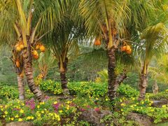 Jardin con cocoteros by <b>Joan Felip</b> ( a Panoramio image )