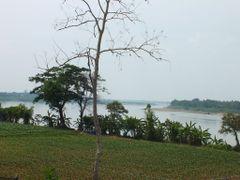 Corn Pantation near Khong River @ Wat luang by <b>TheBluAntnampan</b> ( a Panoramio image )