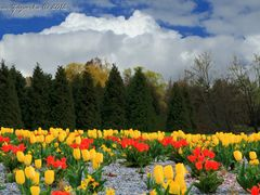 Spring in the Czech Republic. Tulips in the gardens Silva Tarouc by <b>Roman Zazvorka</b> ( a Panoramio image )