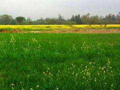 Madhwapur Village India by <b>Jawed Hasan</b> ( a Panoramio image )