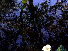 Piccolo angolo nel parco del Sile by <b>MDanieli</b> ( a Panoramio image )
