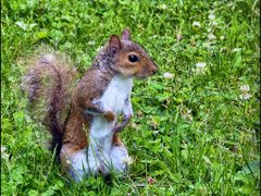 the young squirrel  by <b>patano</b> ( a Panoramio image )
