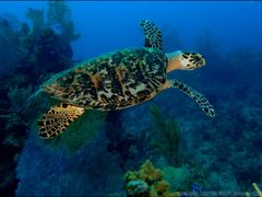 Grand Turk Diving by <b>~ Denise Cottin ~</b> ( a Panoramio image )