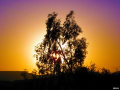 Sunset and trees by <b>&ri.co</b> ( a Panoramio image )