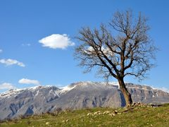 22/3/2012-Devera Barzan by <b>..kamal..</b> ( a Panoramio image )