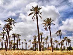 Palmen im Kornfeld by <b>EA. Stoick</b> ( a Panoramio image )