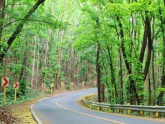Interior road to the chocolate hills by <b>francinelb3</b> ( a Panoramio image )