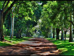 Fazenda CITRA - Limeira - SP - BRASIL. by <b>AntonioVidalphotography</b> ( a Panoramio image )
