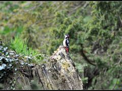 Seen on the public foot path along the River Esk - great spotted by <b>NikonWoman</b> ( a Panoramio image )
