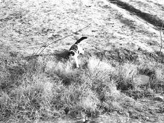 Qala-e-Naw. Калай-Нау. Афганская кошка ловит афганских же мышей  by <b>Сургуль</b> ( a Panoramio image )