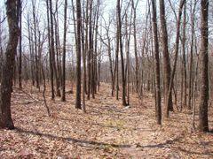 Mina Sauk Mountain Trail by <b>Brad Lyons</b> ( a Panoramio image )