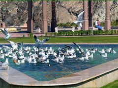 "Masqat promenade -  the sea-gull""s parade by <b>patano</b> ( a Panoramio image )"
