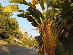 Plant near Hamilton, Bermuda  www.whisper2.com by <b>Piotr Jablonski</b> ( a Panoramio image )