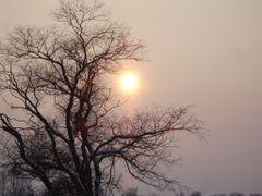 nice shot of tree by <b>» Shkelzen Baftijari «</b> ( a Panoramio image )