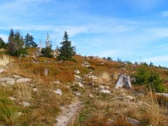 Through rocks and berries by <b>Dodge</b> ( a Panoramio image )