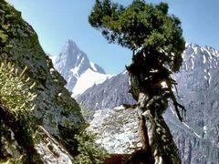 дерево-скалолаз by <b>Sergey Bulanov</b> ( a Panoramio image )