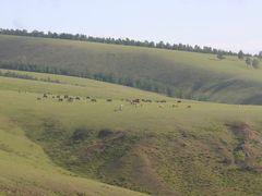 Без названия by <b>ZoLo</b> ( a Panoramio image )