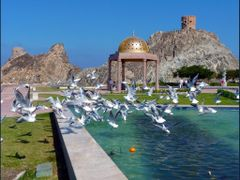 "Masqat - sea-gull""s dance in the promenade by <b>patano</b> ( a Panoramio image )"