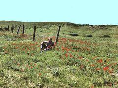 Minefield & poppys. Qala-e-Naw. Калай-Нау. Маки на краю минного  by <b>Сургуль</b> ( a Panoramio image )