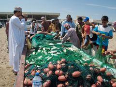 Fish Market in Barka, Oman. by <b>Nicola e Pina Oman 2012</b> ( a Panoramio image )
