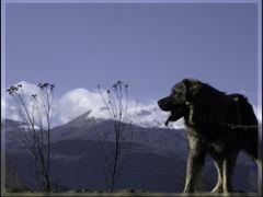Qeni i kopese by <b>Neim Sejfuli ?</b> ( a Panoramio image )