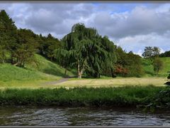 Dalkeith Country Park by <b>NikonWoman</b> ( a Panoramio image )