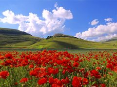 Postcard from Castelluccio  by <b>sistuccio</b> ( a Panoramio image )