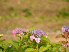 ??? by <b>gataro-</b> ( a Panoramio image )