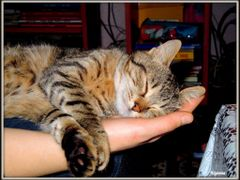 Vise dulci - Sweet dreams by <b>Argenna</b> ( a Panoramio image )