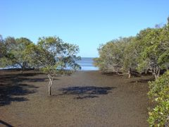 Nudgee Beach Mangroves  by <b>Fritz77</b> ( a Panoramio image )