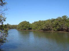 Bondall Wetlands by <b>Fritz77</b> ( a Panoramio image )