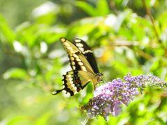 """""""Volando sobre la flor"""" by <b>©Chaydee</b> ( a Panoramio image )"""