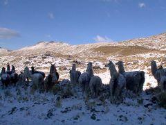 Llamas bajo la nieve by <b>Jaime Caviedes</b> ( a Panoramio image )