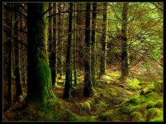 Forest by <b>Vratsagirl</b> ( a Panoramio image )