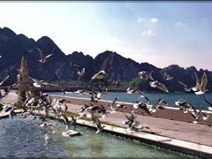 "the sea-gull""s dance in Masqat promenade front the sea by <b>patano</b> ( a Panoramio image )"