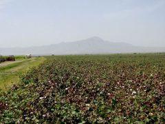 Baumwolleplantage by <b>A.Franz</b> ( a Panoramio image )
