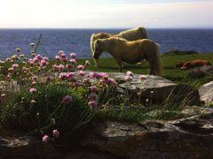 IRELAND -Ballyryan by <b>Cor & Cri</b> ( a Panoramio image )