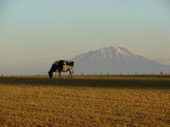 ATARDECER by <b>MANUEL MARDONES</b> ( a Panoramio image )