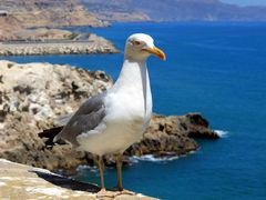 """The guardian  of Melilla""""s fortress. by <b>Meersch</b> ( a Panoramio image )"""