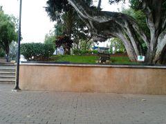 Parque Cervantes by <b>sandycruz</b> ( a Panoramio image )