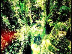 La foresta incantata. Por Patrizio Rigobello.  by <b>Madame X Privado</b> ( a Panoramio image )