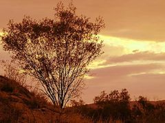 Alice springs by <b>rosina lamberti</b> ( a Panoramio image )
