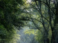 Sun rays in the forest, Vaassen by <b>© BraCom (Bram)</b> ( a Panoramio image )