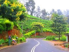 On the way to Nuwara Eliya, at Atabage by <b>Chandana Gunatilake</b> ( a Panoramio image )